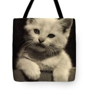 White Fluffy Kitten Tote Bag