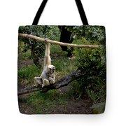 White Handed Gibbon 1 Tote Bag