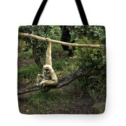 White Handed Gibbon 2 Tote Bag