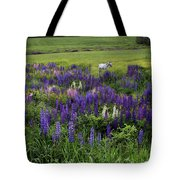 White Horse In A Lupine Field Tote Bag
