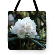 White Inflorence Of  Rhododendron Plant Tote Bag