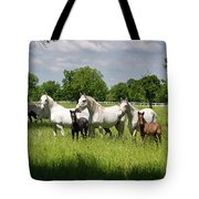 White Lipizzaner Mares Horse Breed With Dark Foals Grazing In A  Tote Bag