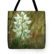 White Lupin Lupinus Albus Tote Bag