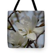 White Magnolia Blooming In Spring Tote Bag
