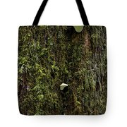 White Mushrooms - Quinault Temperate Rain Forest - Olympic Peninsula Wa Tote Bag by Christine Till