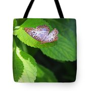 White Peacock Butterfly II Tote Bag