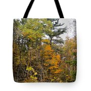 White Pine Hollow State Forest Tote Bag