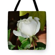 White Rose After Rain 1 Tote Bag