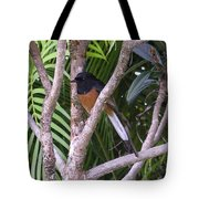 White Rumped Shama Tote Bag