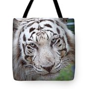 White Siberian Tiger Tote Bag
