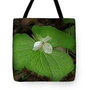 White Spring Trillium Tote Bag