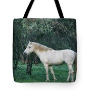 White Stallion In The Woods  Tote Bag