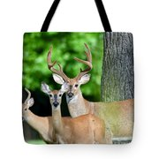 White-tailed Deer Family Tote Bag