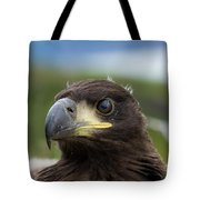 White-tailed Eagle #1 Tote Bag