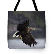 White-tailed Eagle Against Cliffs Tote Bag