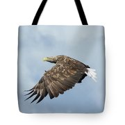 White-tailed Eagle Against Clouds Tote Bag