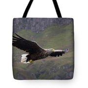 White-tailed Eagle Approaches Tote Bag