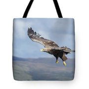 White-tailed Eagle On Mull Tote Bag