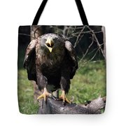 White Tailed Eagle Screaming Nature Wildlife Scene Tote Bag