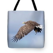 White-tailed Eagle With Lunch Tote Bag