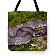 White-tailed Hognose Viper Tote Bag