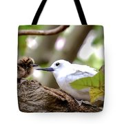 White Terns Koa And Parent...bird Love Tote Bag
