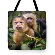 White-throated Capuchin Monkeys Cebus Tote Bag