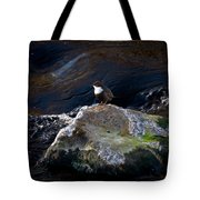 White-throated Dipper Nr 1 Tote Bag