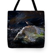 White-throated Dipper Nr 2 Tote Bag