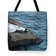 White-throated Dipper Nr 4 Tote Bag