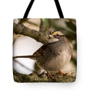 White Throated Sparrow On Branch New Jersey Tote Bag