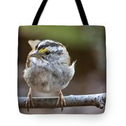 White Throated Sparrow Portrait Tote Bag