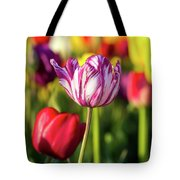 White Tulip Flower With Pink Stripes Tote Bag