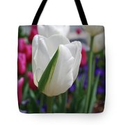 White Tulip With A Green Stripe In A Garden Tote Bag