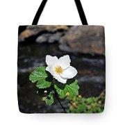 White Wild Rose In Big Thompson Canyon Tote Bag