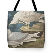White-winged Silvery Gull Tote Bag