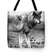 White Wolf Z Tote Bag