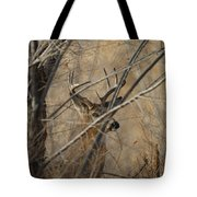 Whitetail Buck Square Tote Bag