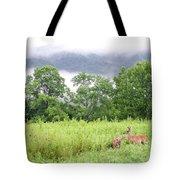 Whitetail Deer 1 Tote Bag