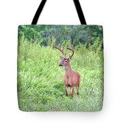 Whitetail Deer 4 Tote Bag