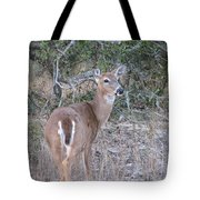Whitetail Deer II Tote Bag