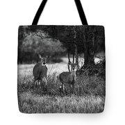 Whitetailed Deers Tote Bag