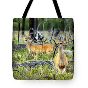 Whitetails Tote Bag