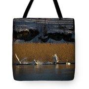 Whooper Swan Nr 12  Tote Bag