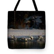 Whooper Swan Nr 13 Tote Bag