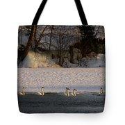 Whooper Swan Nr 14 Tote Bag