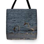 Whooper Swan Nr 2 Tote Bag