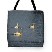 Whooper Swan Nr 8 Tote Bag