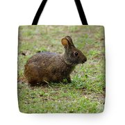 Wild Bunny Eating Grass Tote Bag