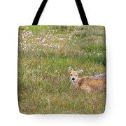 Wild Chinese Water Deer  Tote Bag